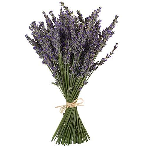 TooGet Flores de Lavanda Natural, Fragante Ramo de Lavanda Seca 100 Se Deriva de 40-45cm...