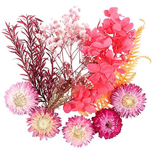 UFLF Flores Preservadas Secas Naturales Variadas Plantas Secas Flores para Regalos Navidad...